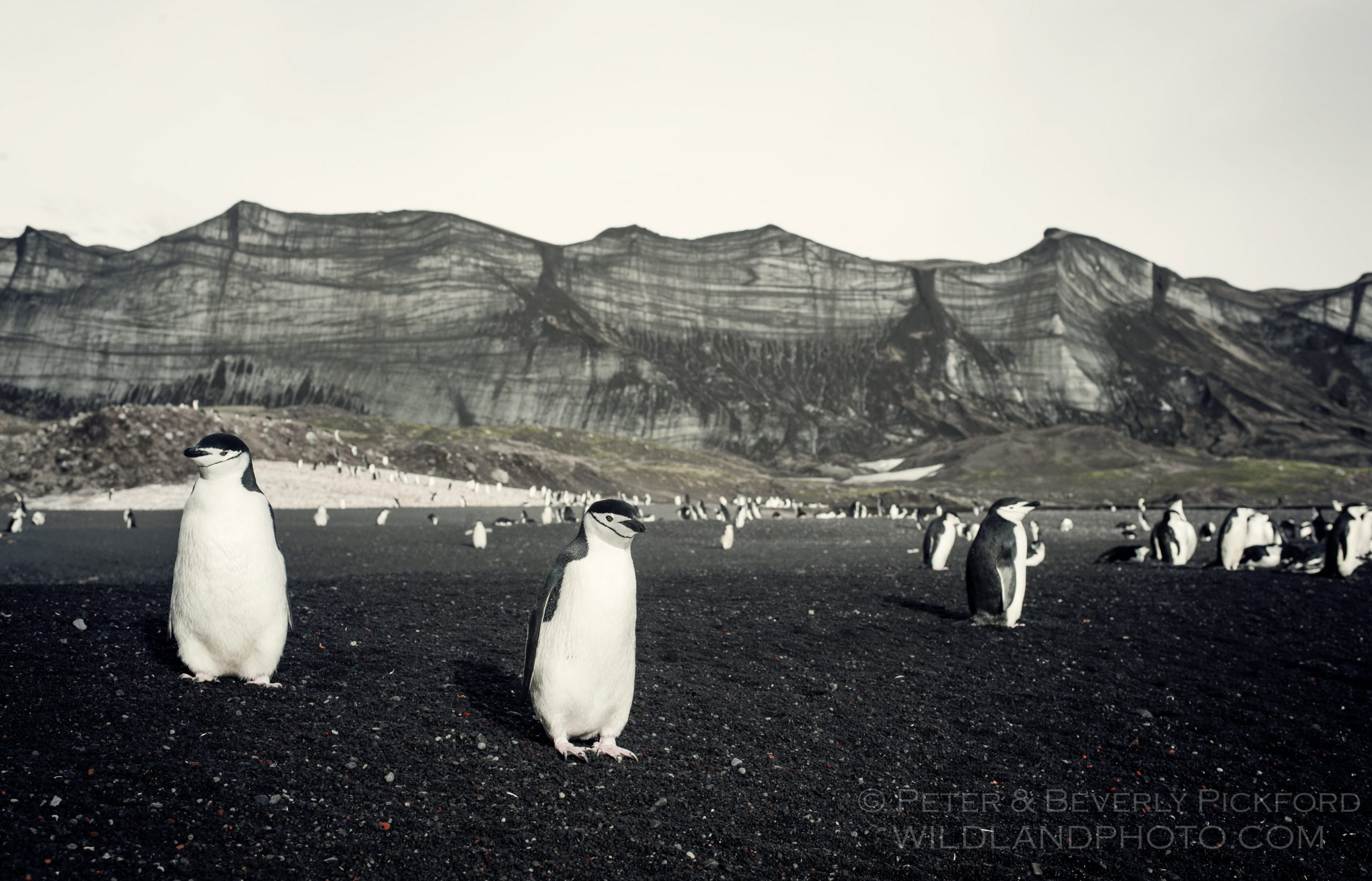pickford–antarctica-0797