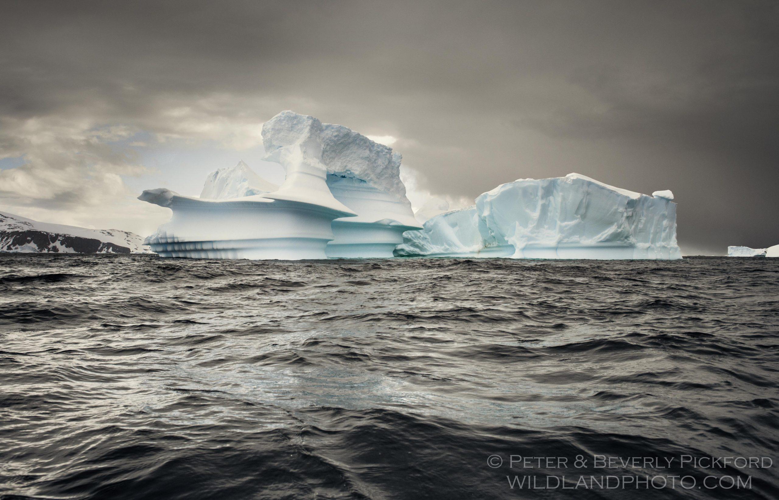pickford–antarctica-7882