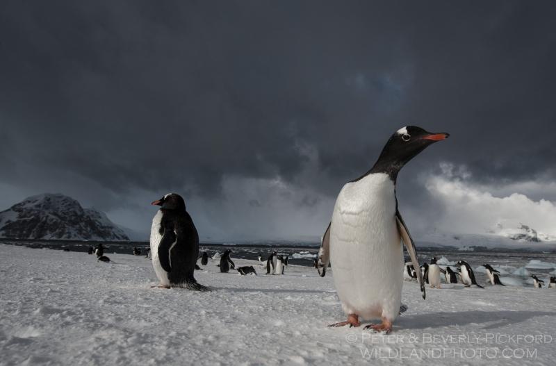 pickford–antarctica-7504