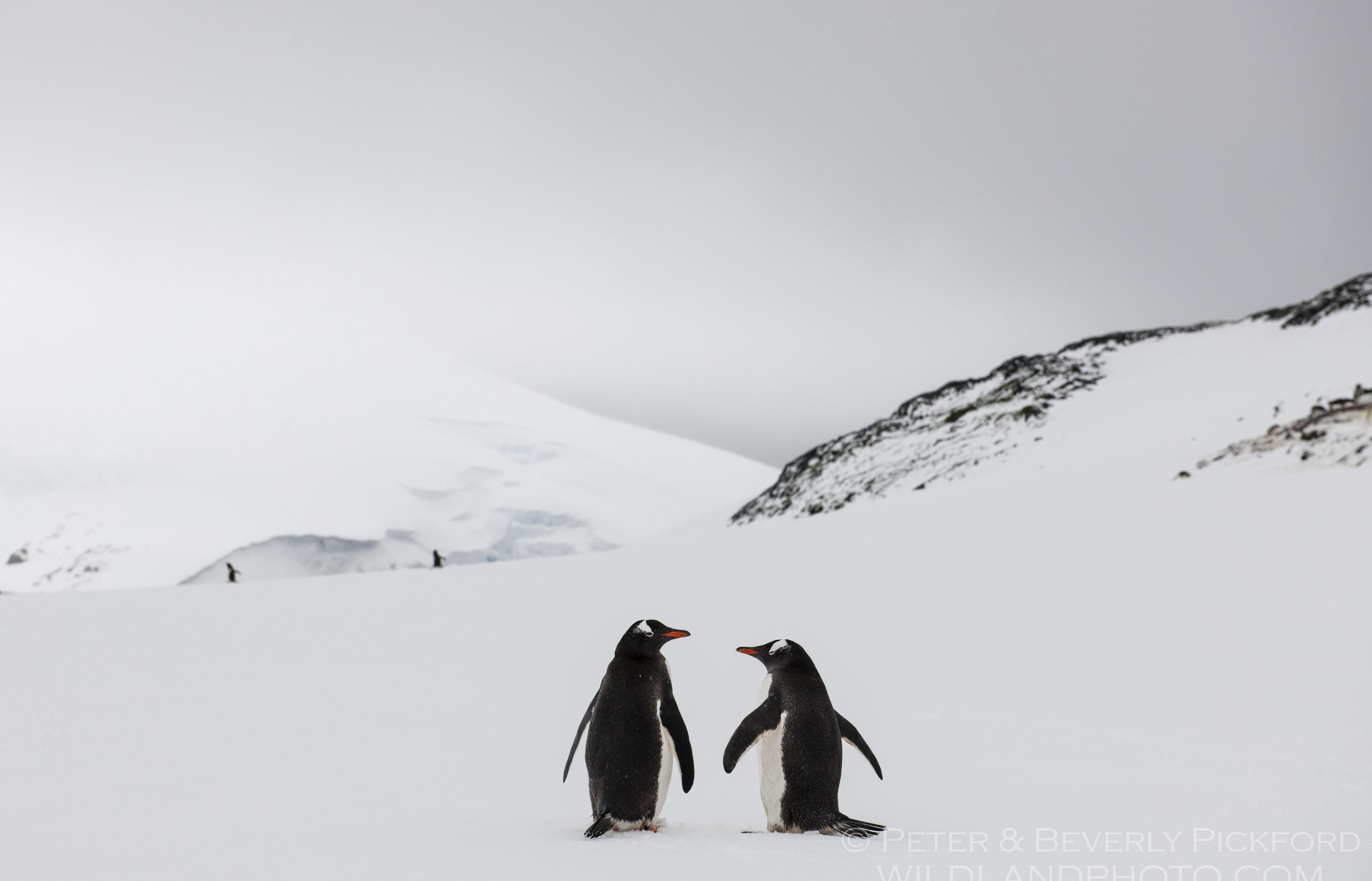 pickford–antarctica-7545