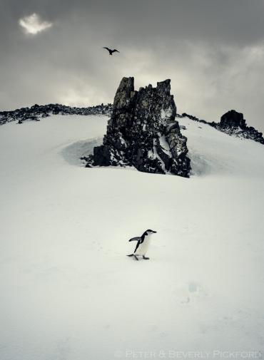 pickford–antarctica-9511