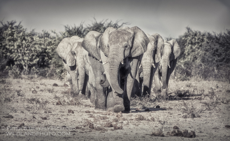 pickford–namibia-0073