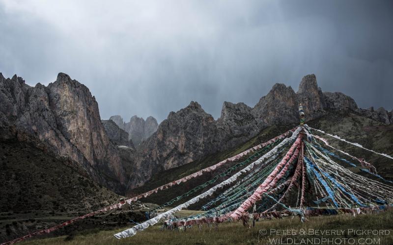 pickford–tibet-3385